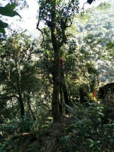 Rishi Tea and Botanicals Wild White Tea Yunnan Province