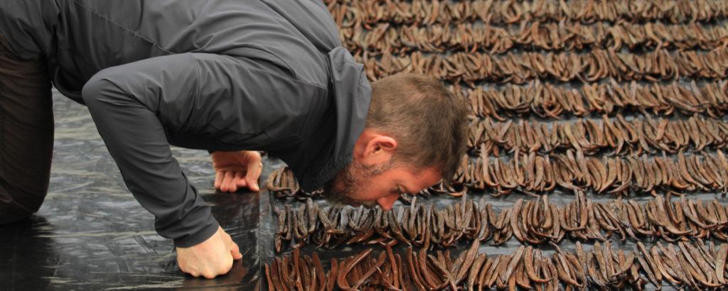 Sourcing Vanilla – Rishi's Origin Story to San Luis Potosi