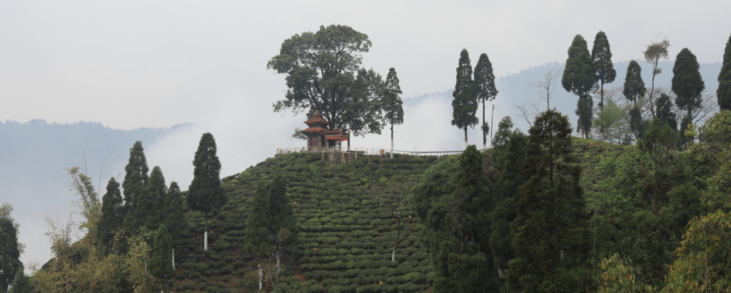 Majestic Himalaya Teas Pt.1: the Magic of Darjeeling