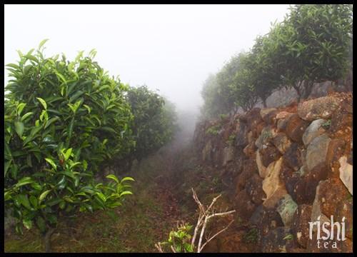 Misty groves