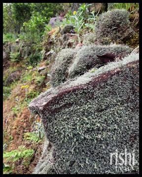 Shan Yun: High-mountain charm