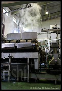 Sencha Steaming