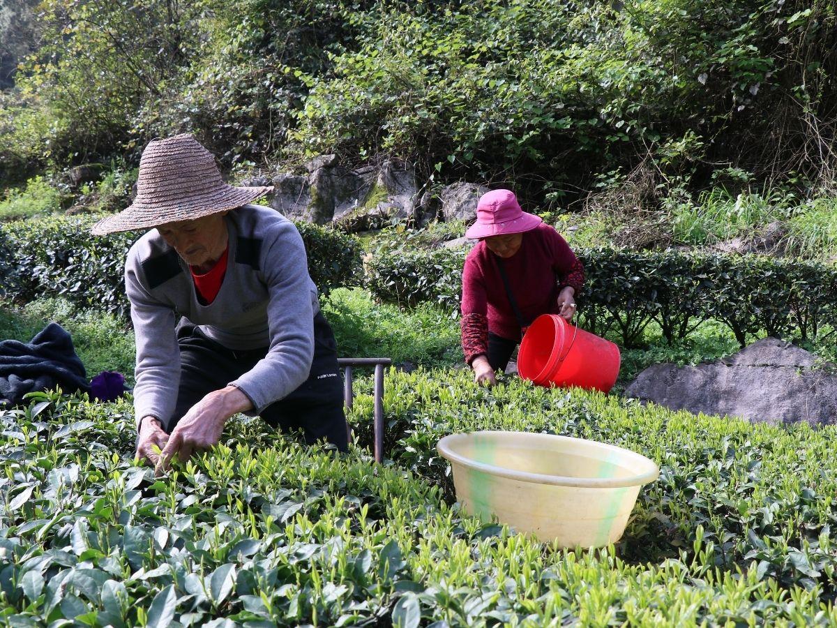 2021 Spring Harvest : Follow Along
