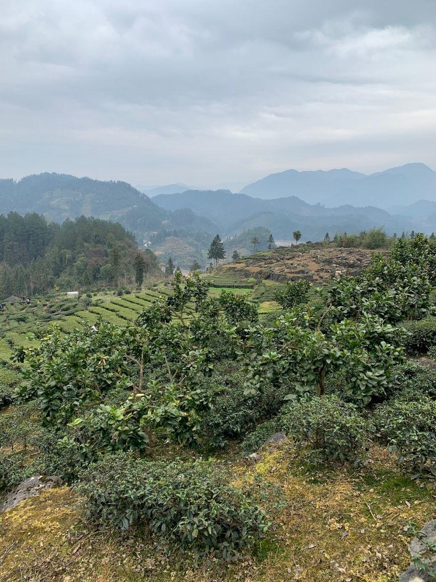 Jing Long Ping tea village in Xuan En 1