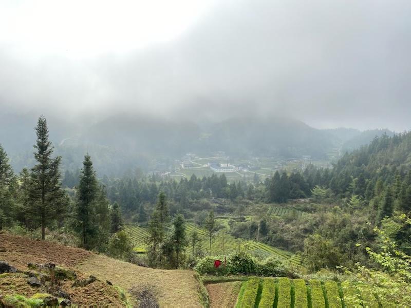 ing Long Ping tea village in Xuan En